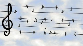 birds-2672101_960_720